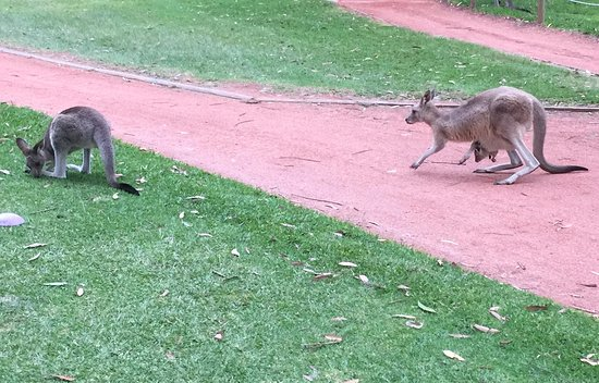 Nelson Bay, Australia: Mother, Teenager and Infant in Pouch