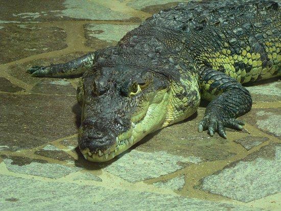 Krokodyli ZOO Protivin