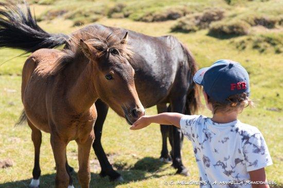 Ventiseri, France: Les chevaux du plateau du Coscione