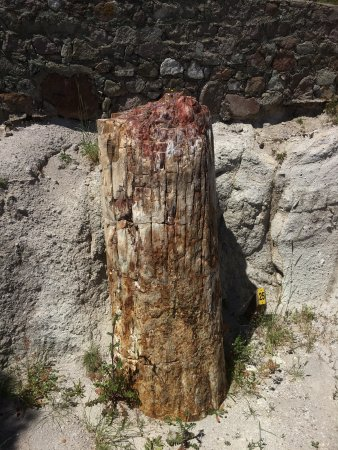 Petrified Forest of Lesbos: photo0.jpg