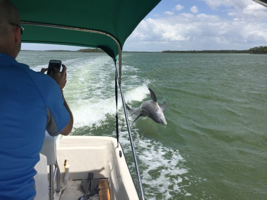 Tour the Glades : dolphins off the boat