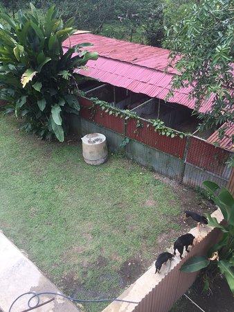 Costa Rica Dog Rescue La Fortuna