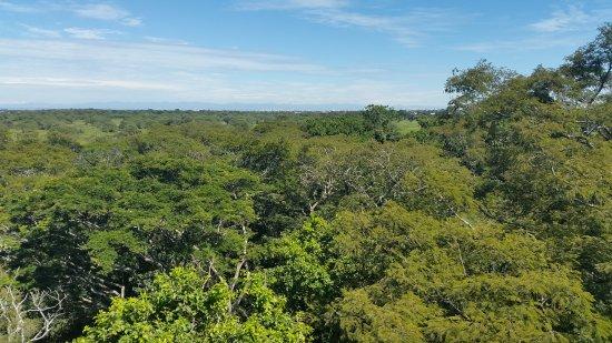 Jardin Botanico Santa Cruz: VISTA DESDE EL MIRADOR DE 40 M DE ALTURA
