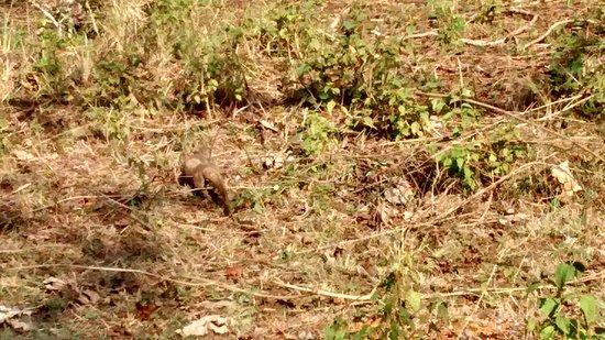 Bandipur National Park and Tiger Reserve : Bandipur