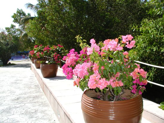 Hotel Marina El Cid Spa & Beach Resort : Bridge to the main pool