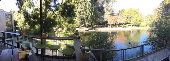 Suter Art Gallery Cafe: Photos from the outdoor cafe verandah