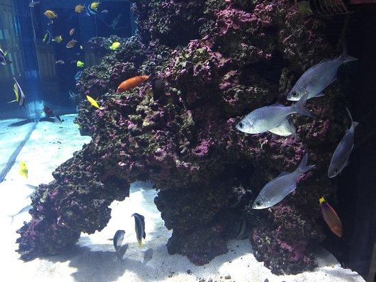 Mokupapapa Discovery Center: photo0.jpg