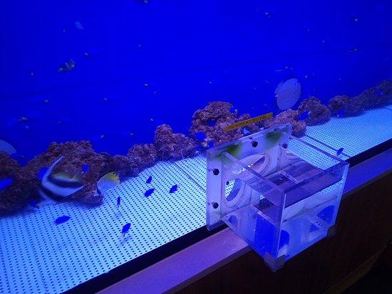 uxotto: 手を入れて魚が触れるよう工夫された水槽