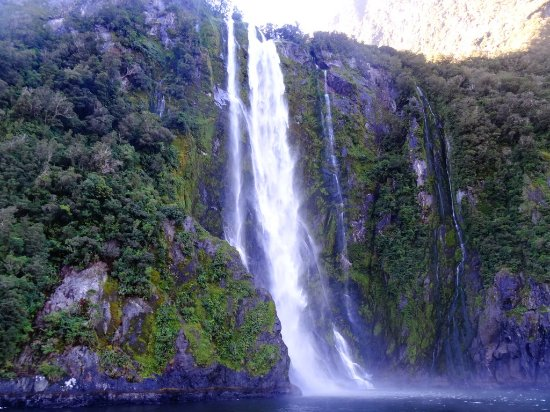 Fiordland Tours Ray