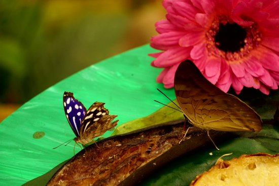 Garten der Schmetterlinge