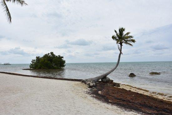 The Moorings Village: beach
