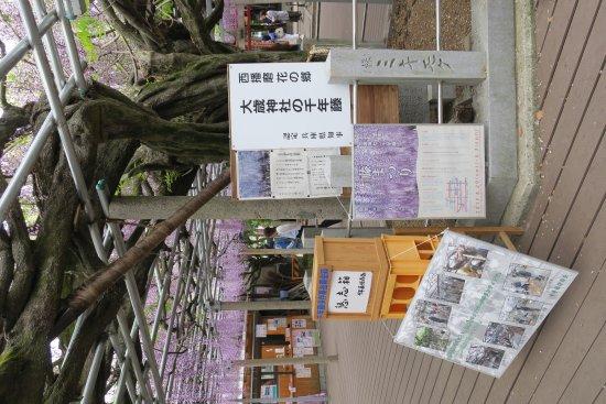 Shiso, Japonia: 20170505131730_large.jpg