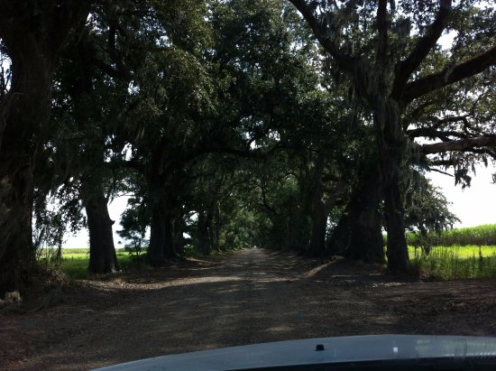 Saint Martinville, Луизиана: Oak and Pine Alley, St. Martinville, LA