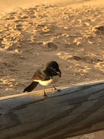 Noosaville, Australia: photo7.jpg