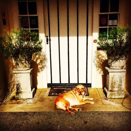 Plas Dinas Country House: Pet Friendly!
