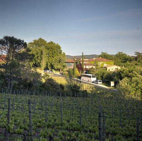 Lauret, France: Das Hotelgelände liegt im Bild rechts des Weges inmitten von Weinbergen