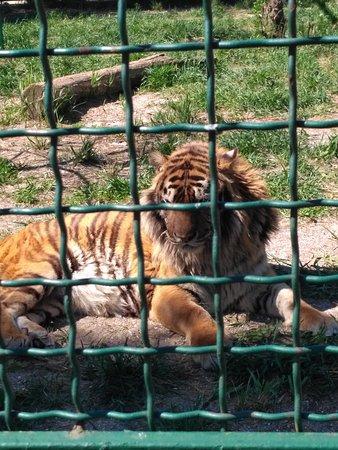 Зоопарк Сафари: IMG_20170506_102606_large.jpg