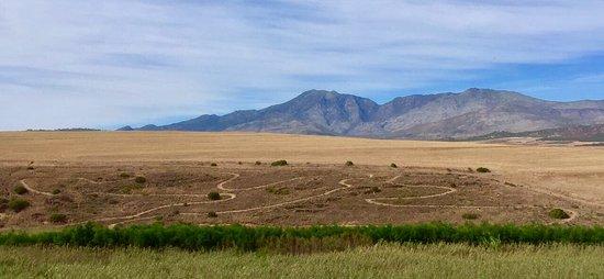 Hermanus, Sydafrika: Wildekrans