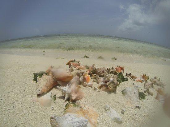 Isla de Carenero - Los Roques: Carenero
