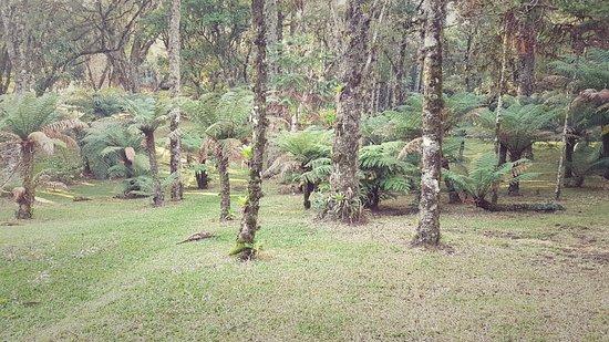 Hotel Continental Canela: bosque frondoso