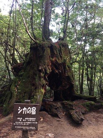 photo3.jpg - Picture of Shiratani Unsuikyo Valley, Kumage-gun Yakushima-cho -...