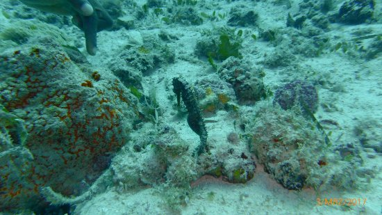 Diving Poseidon: IMG-20170305-WA0031_large.jpg