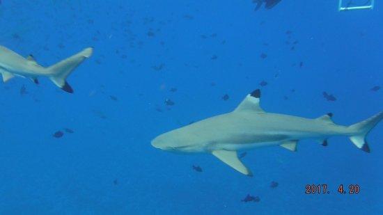 Good Times W Manu In Bora Bora Picture Of Lagoon