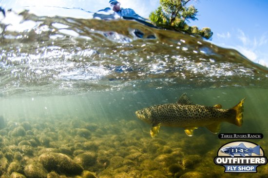 Ashton, ID: Guided fly fishing on the Henry's Fork, Snake River, Teton River, & Yellowstone park.