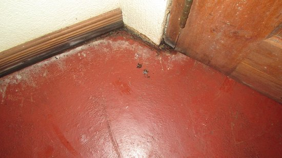 Princesa de la Luna Eco Lodge: Sol de la chambre infestés de bestioles mortes et d'excréments