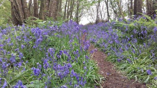 Sedlescombe, UK: 20170506_130344_large.jpg