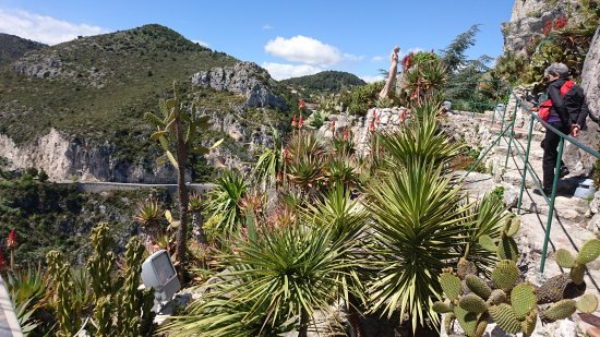 Picture of le jardin exotique d 39 eze eze - Jardin exotique d eze ...