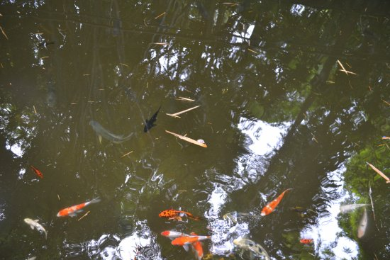 Japanese fish pond picture of la vanille nature park for Japanese pond fish