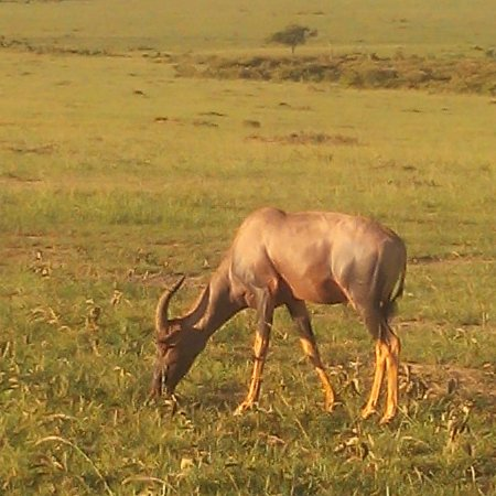 African Outback Wildlife Safaris