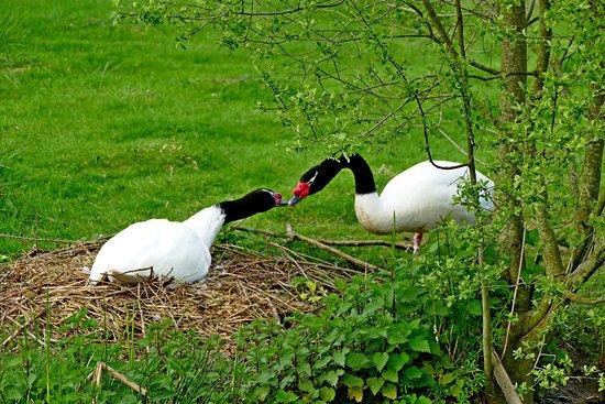 Le Blanc, Francia: Madame couve