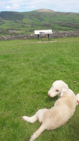 Peveril Castle: Holly looking enjoying a rest