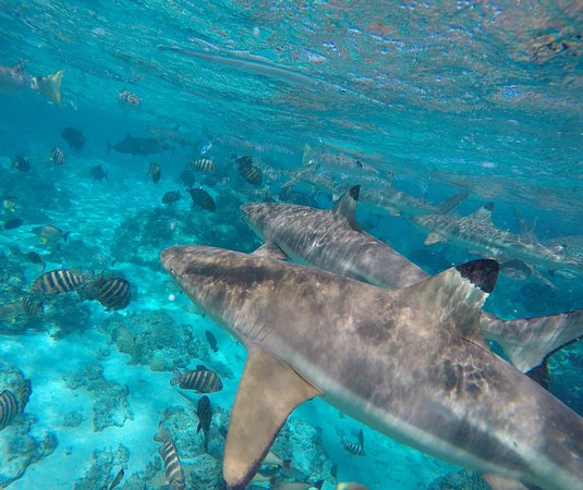 Moorea, Polinésia Francesa: photo0.jpg