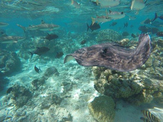 Moorea, Polinésia Francesa: photo1.jpg