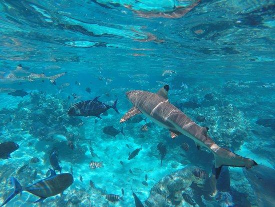Moorea, Polinésia Francesa: photo2.jpg