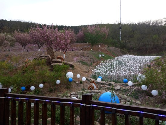 Lushun Longwangtang Cherry Park: A river of light
