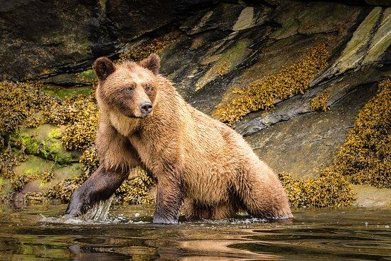 Khutzeymateen Grizzly Bear Sanctuary 이미지