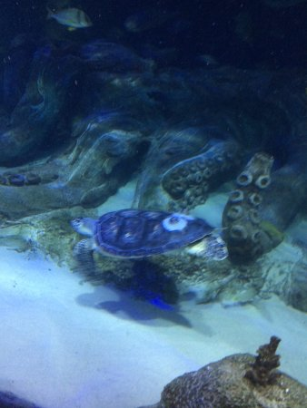 Concord, NC: Here is Neptune the Sea Turtle