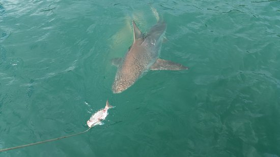 Fishing Waiheke - Day Tours Photo