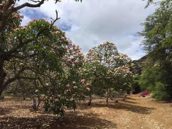 1 Picture Of Koko Crater Botanical Garden Honolulu Tripadvisor