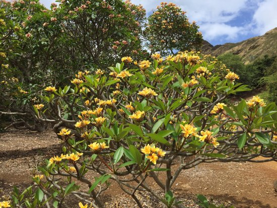 Picture Of Koko Crater Botanical Garden Honolulu Tripadvisor