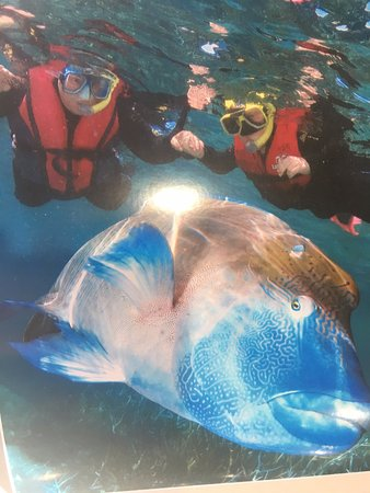 Great Adventures: snorkeling on the Great Barrier Reef