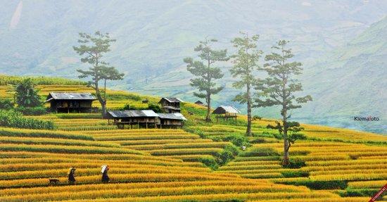 Yen Bai, Вьетнам: Mu căng chải Yen bái Tours