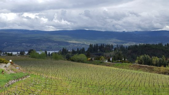 Summerland, Canadá: View of the vineyard