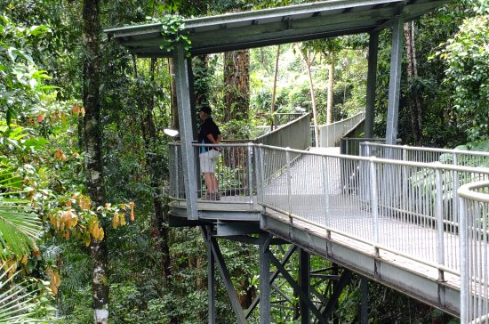 Mamu Tropical Skywalk Even if you donu0027t like heights itu0027s ok up in & Even if you donu0027t like heights itu0027s ok up in the trees - Picture ...