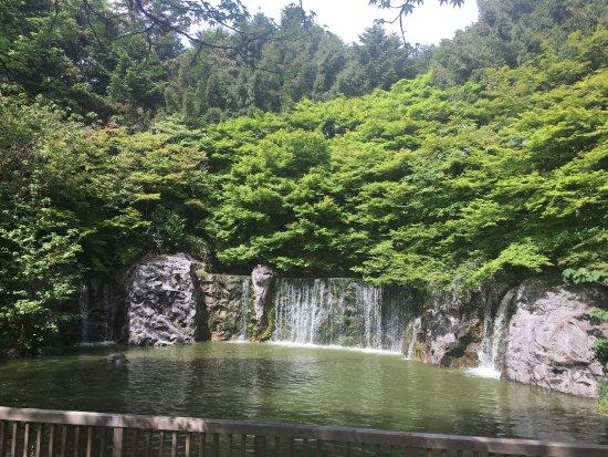 Flower Expo Memorial Park Tsurumi Ryokuchi : めっちゃきれい