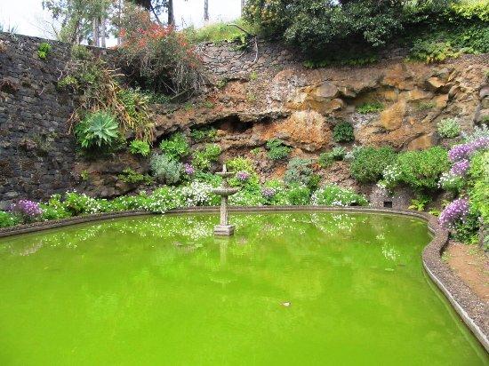 Ungepflegter Botanischer Garten Funchal Picture Of Madeira